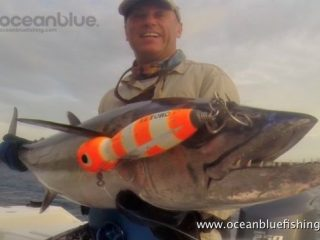 Alan Morrison Mothership Trip: this is a dogtooth tuna