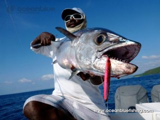 huge dogtooth tuna