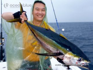 freshly caught yellowfin