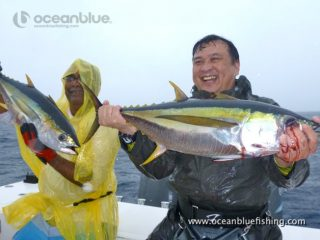 freshly caught yellowfin tunas