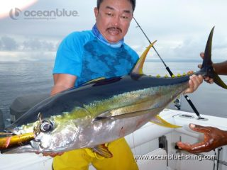 large-sized yellowfin
