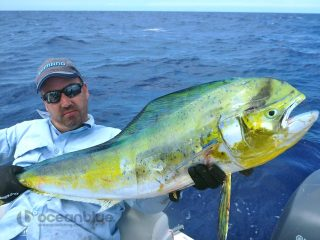 paradise sportfishing adventures