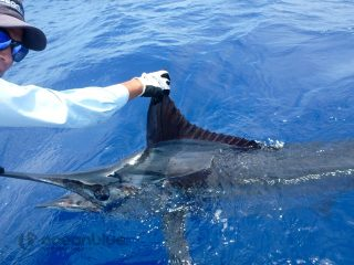 sea-adventure-sportfishing-3