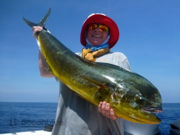 big mahi-mahi fishing by Shefishes