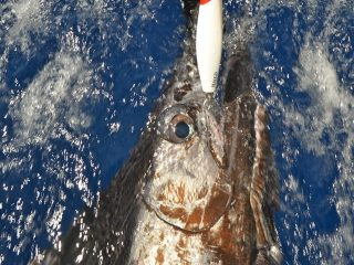 blue-marlin-fishing-charters