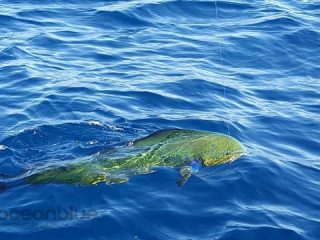 fishing-charters-vanuatu-prices