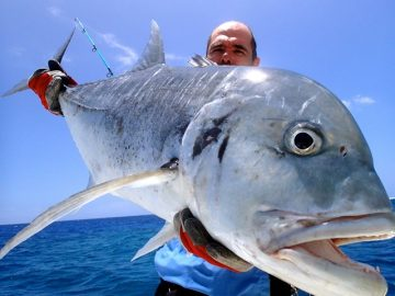 Grant & Co. Vanuatu huge dogtooth fish