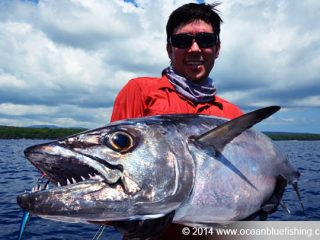 dogtooth tuna are torpedo shaped