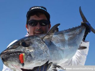 A closer look at a dogtooth tuna