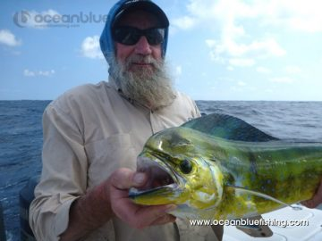 angler caught a big mahi fish