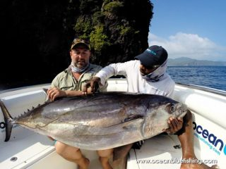The Gymnosarda unicolor or commonly known as dogtooth tuna.