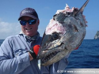 dogtooth tuna head
