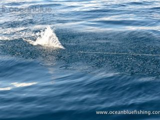 ocean-blue-game-fishing-3