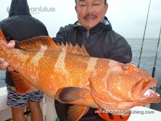 large-sized red bass