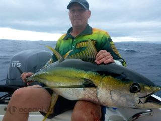 yellowfin tuna sport fishing