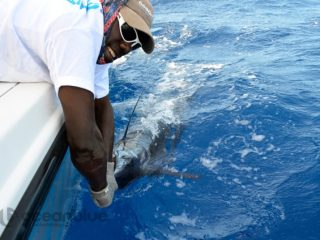 liveaboard-fishing-charters
