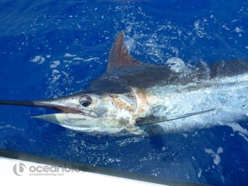ocean-sport-fishing-adventure-2