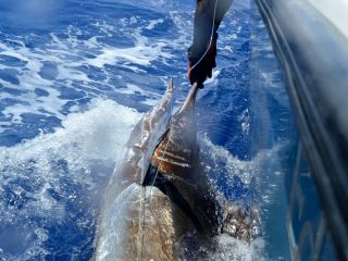 blue marlin fishing in vanuatu