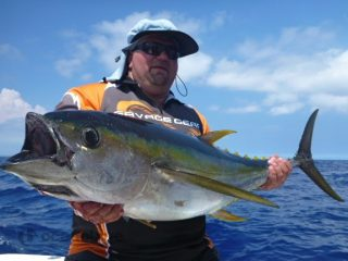 yellowfin tuna on topwater