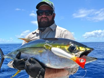 yellowfin tuna on popper