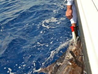 blue-marlin-fishing-guides