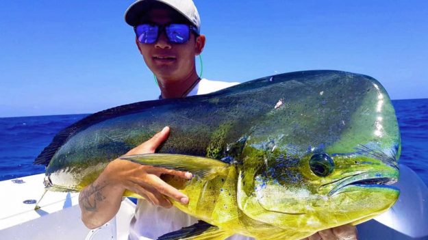 Facts about Mahi-mahi that you need to know